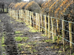 farm-fence2
